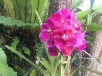 Dtim's orchid.