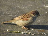 The Sparrow makes an appearance