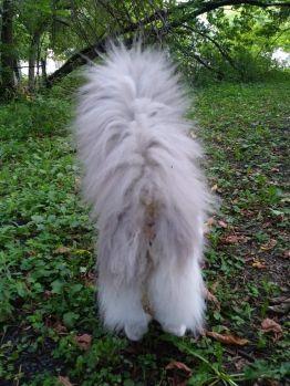 Gray - my little fluffy butt!!