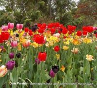 Tulips picture was taken at Bowring park St Johns  Newfoundland