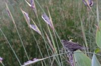 bird on the reeds