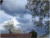 Třešeň a dramatická obloha  -  Cherry tree and dramatic sky