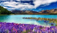 Tekapo_See_in_New Zeland