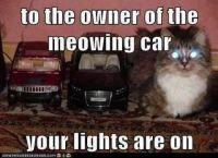 meowing car