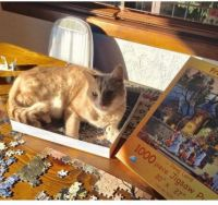 Mao Mao the Cat Puzzler 2020