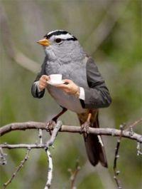 2 ~  The Grey Tea-time Sparrow.