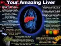 YOUR AMAZING LIVER!