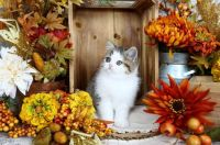 Autumn Still Life With Kitten