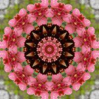 kaleidoscope 339 blooming tree large