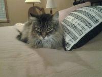 Murphy  cuddling Christmas pillow