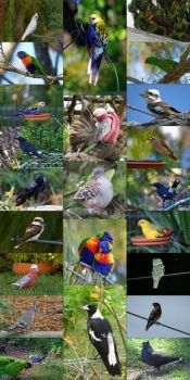 Some of the birds that have visited us this year...