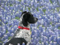 Zach sitting in the bluebonnets near Austin, TX