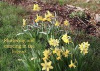 Spring Hath Sprung