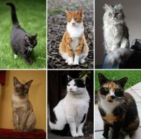 Feline Friends Collage