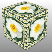 Narcis v kostce...  Daffodil in a cube