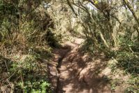thurstaston 19-03-2014 hill paths millenia of wear in sandstone 01
