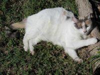 Molly Enjoying The Sun.
