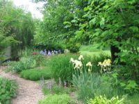 maple garden in late spring