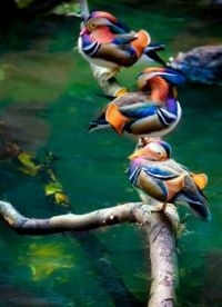 Pretty Birds all in a row