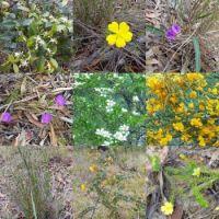 Australian Spring Flowers