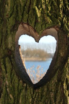 Heart carved in tree (Lelystad, the Netherlands)