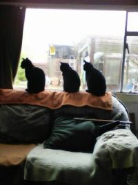 My Cats  waitng for rain to stop