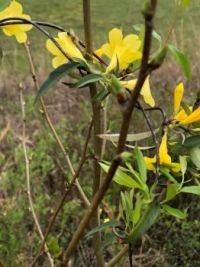 South Carolina Wild Flowers