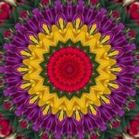 kaleidoscope 320 yellow and purple medium