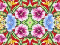 energetic hibiscus