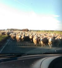 We met heavy traffic this morning!