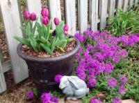 Tulips, Verbena, Rabbit... Oh My!