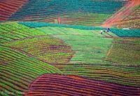 Laotian Fields (photo)