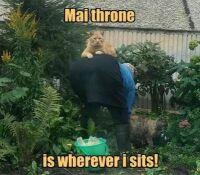 Mai throne