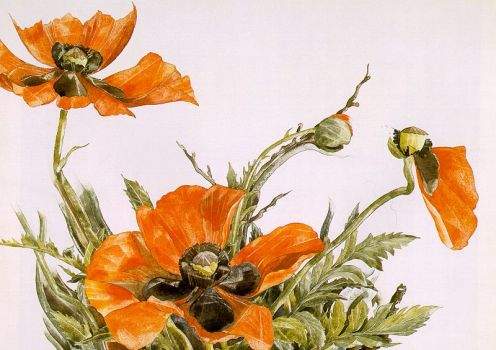 Poppies by Charles Demuth