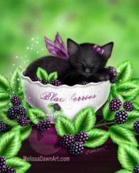 Blackberry Birthday Kitten