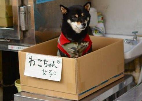 dog in box in china (2)