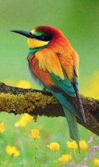 Beautiful Birds - No 35