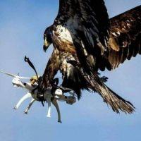 Nature Beating Technology
