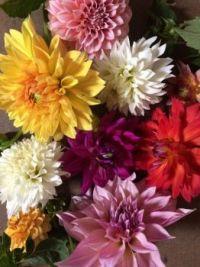 fresh flowers.jpg1