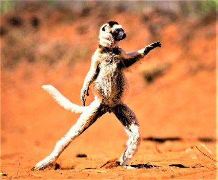 Disco Dancing!!  . . .  Disco!?!?!?