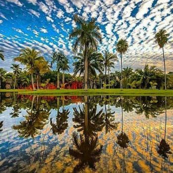 Palm Trees Reflected