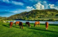 Wyoming Horse Ranch