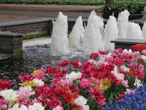 Tulips and fountains