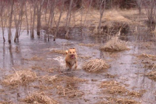 runnin' thru the marsh