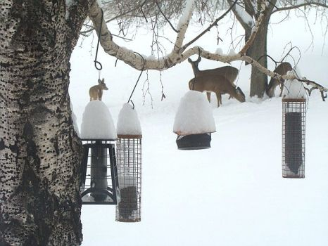 Birdfeeders and Deer in the Snow