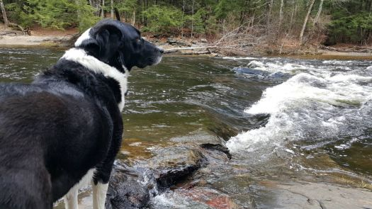 Sam at the rapids