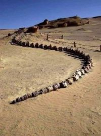 Whale fossil in Wadi Al-Hitan (Whale Valley), in the Western Desert of Egypt.