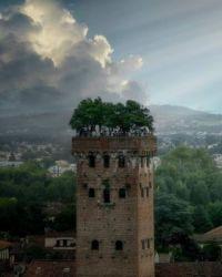 Guinigi Tower in Lucca, Italy  5507