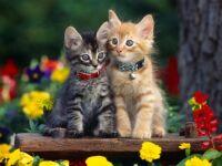 AAAAAWWWWW, PRETTY KITTIES...