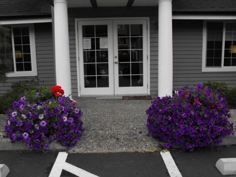 The Petunias are overflowing